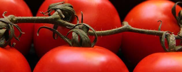 Lei av hermetiske tomater?